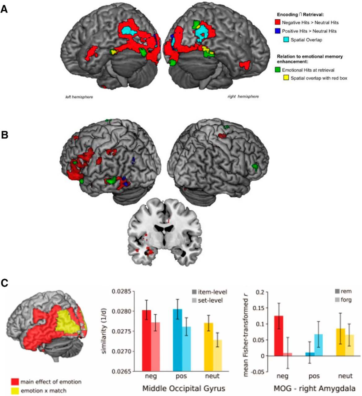 Empirical evidence of emotion-enhanced sensory cortex and amygdala recapitulation during memory retrieval. A, Conjunction fMRI analyses of brain activity associated with successful memory during encoding and retrieval revealed significant spatial overlap (i.e., recapitulation) in ventral temporo-occipital cortex for negative and positive emotional images (red, blue and turquoise clusters). The spatial extent of recapitulation across the visual stream was greater for negative (red clusters) than positive emotional stimuli (blue clusters). Areas associated with emotion-related recapitulation were also correlated with emotional enhancements (not differentiated by valence) in behavior (data and figure from Kark and Kensinger, 2015).