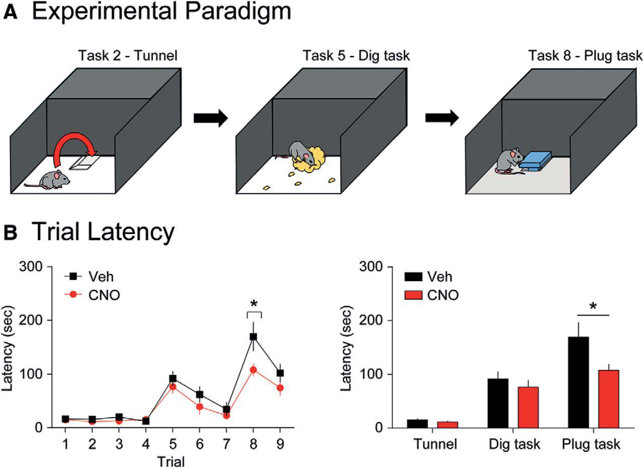 Figure 1. Selective activation of CCK-GABA neurons enhances performance in the puzzle box test. (A) Cartoon of the two-chambered puzzle box that contained obstacles that hindered access from the start area to the goal area of the box. In the nine trials, there was unrestricted access, or the mouse had to acquire a new strategy to escape to the goal area, such as passing through a tunnel (Task 2), digging through bedding (Task 5), or moving a cardboard plug (Task 8). (B, left) Escape latency of mice in which CCK-GABA neurons were activated (CNO) or vehicle (Veh) control mice in all nine trials of the puzzle box test. Lower escape latencies indicate better performance. CNO-treated mice show significantly lower escape latency only in trial 8 (plug task). (B, right) Escape latencies for CNO-treated and Veh-treated mice in all novel obstacle trials (tunnel, dig, and plug task). All figures present data as mean ± SEM. Asterisk indicates statistical significance. (Figure 5 in Whissell et al. 2019.)