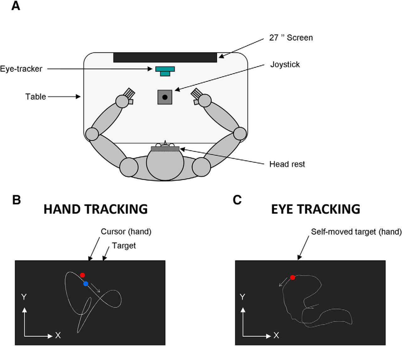 Authors show that although handedness impacts the accuracy of hand movement control, it has virtually no influence on the ability to predict the visual consequences of hand movements.