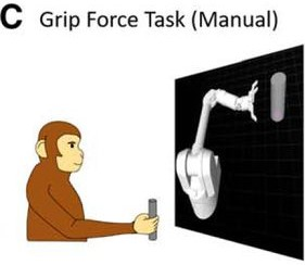 Figure 1. Center-out reaching tasks and grip force tasks. Schematic of cued manual force tasks.