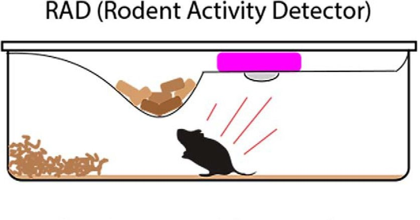 RAD (Rodent Activity Detector)